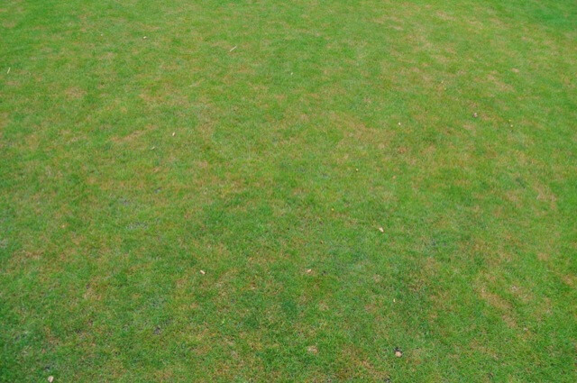 Rosa Pilzbefall im Rasen - Flecken im Rasen