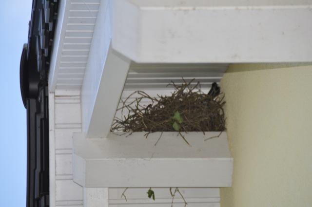 Vogelabwehr am Haus-Giebel - Vogelnest auf dem Dachbalken
