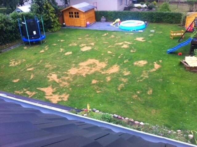 Braune Flecken im Rasen