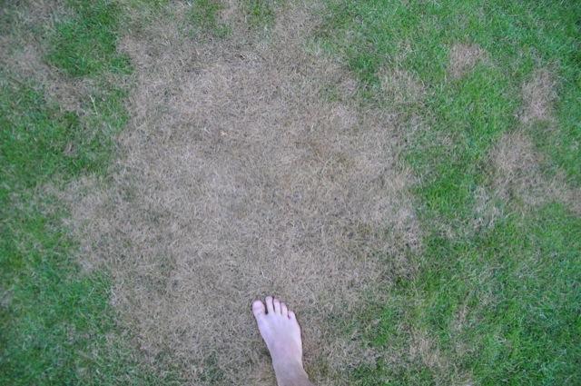 Riesig - Das ganze Ausmaß eines Rasenflecken