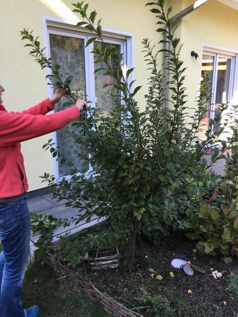 Bäume im Herbst zurück schneiden