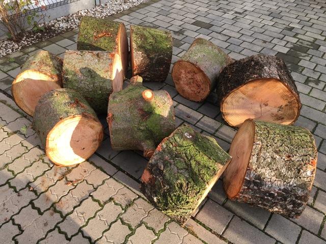 Kaminholz nach der Baumfällung