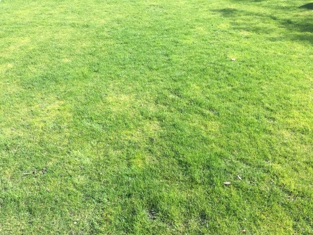 Rasen im Frühjahr nach dem Winter und vor der Pflege