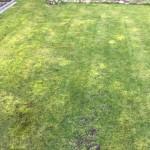 Rasen der ganz schön vermoost ist