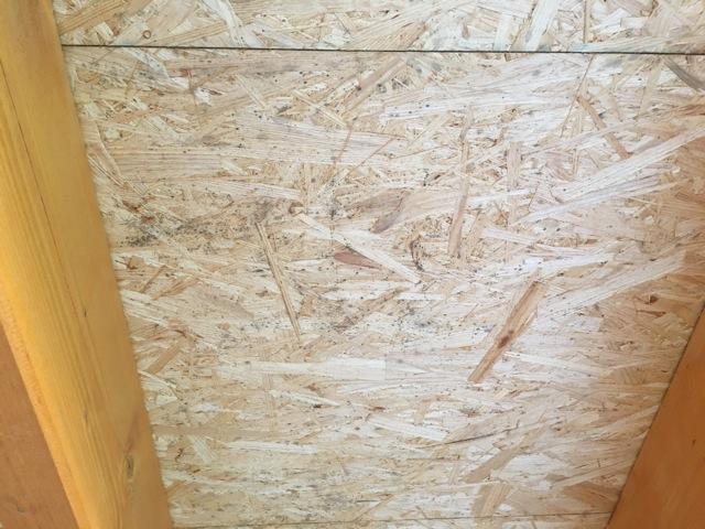 Schimmelpilz auf dem Holz der Terrassenüberdachung