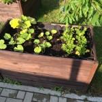 Große Vielfalt bei Gemüse im Hochbeet