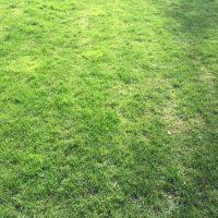 Wann Rasen richtig vertikutieren? Anleitung für Hobby-Gärtner
