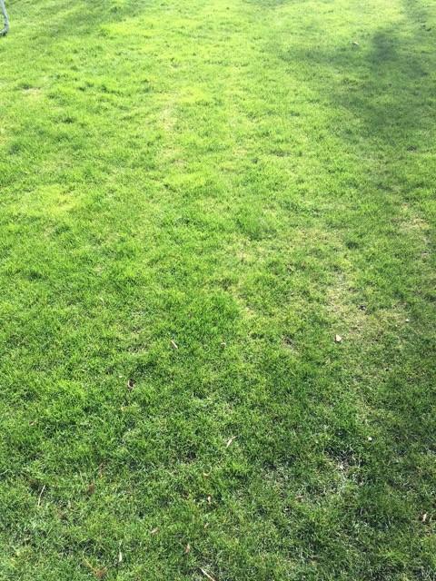 Ausgangslage: Rasen nach dem Winter