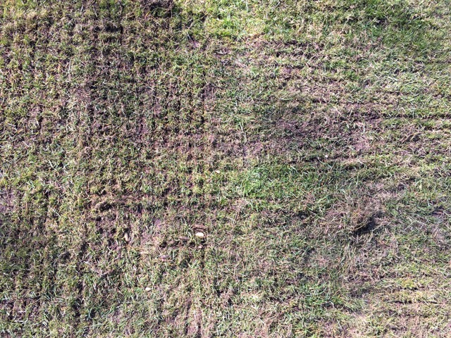 Rasen doppelt vertikutiert - in quer und längs-Richtung