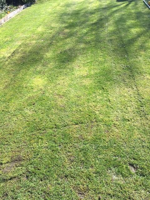 Rasen tief / niedrig mähen