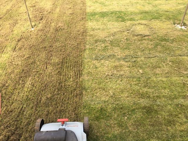 Wann Rasen Richtig Vertikutieren Anleitung Für Hobby Gärtner