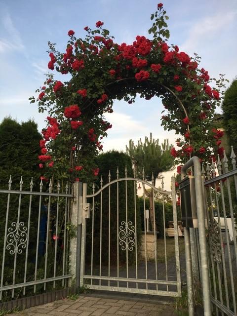 Rosenbogen am Hoftor als Eingang