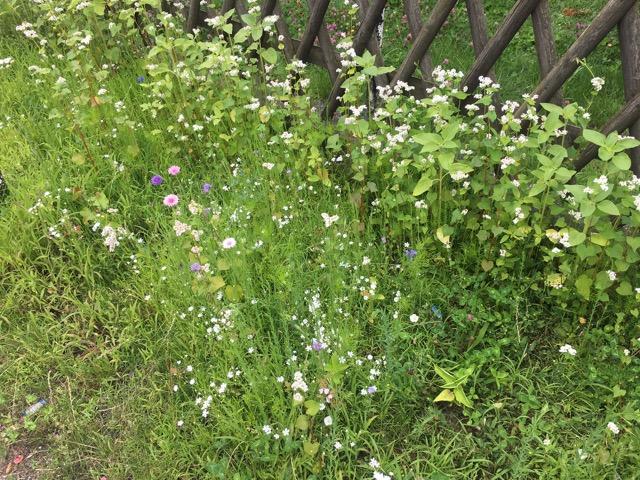 Bienenwiese: Bienenweide für Deutschland-Summt