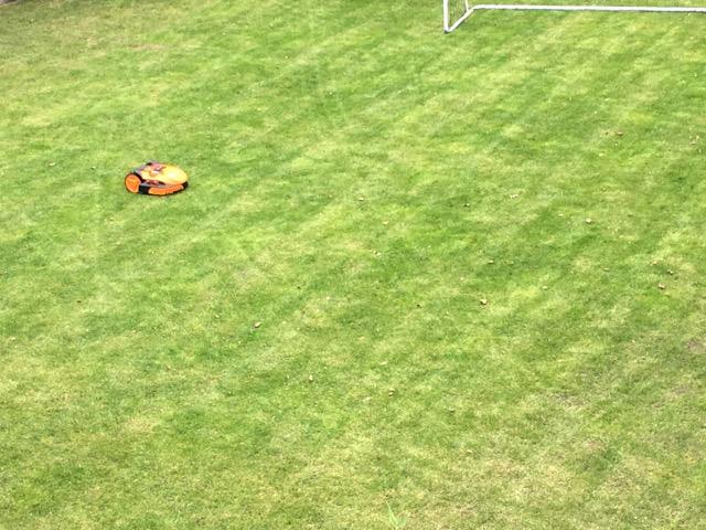 Rasenmähen mit einem Mähroboter - Fahrspuren im Garten vom Landroid SO500i von Worx