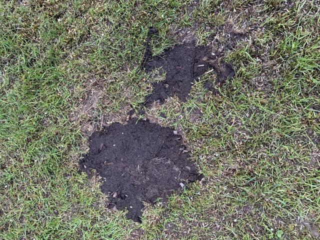 Löcher im Rasen mit Erde ausbessern